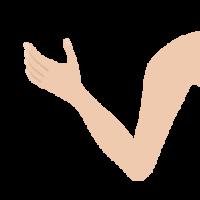 腕・肘・手首・指・手